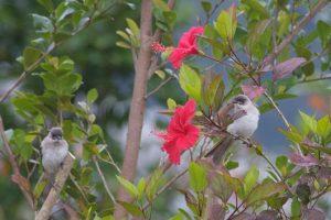 母鳥と小鳥